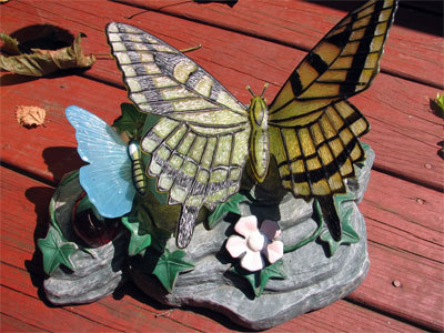 Click here to download a 2592 x 1944 JPG image showing ornamental butterflies basking in the sun.